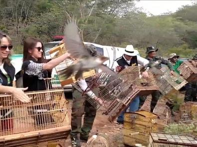 Imagens de fila de agentes e técnicos abrindo gaiolas com aves sendo libertadas em seu habitat em Alagoas foram compartilhadas milhões de vezes (Foto: BBC)