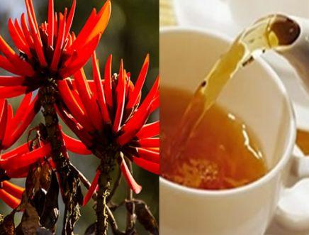 Mulungu - Chá
