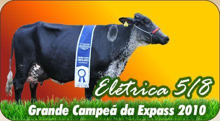 Grande campeâ expass 2010