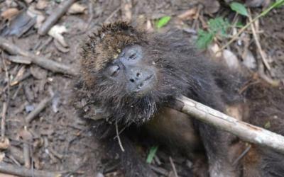 Secretaria de Sa�de confirma morte de macaco por febre amarela em Extrema.